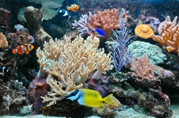 Aquario colorido