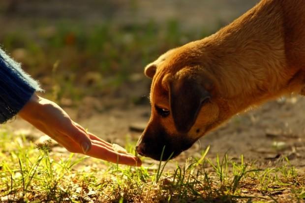 cachorro cheirando grama