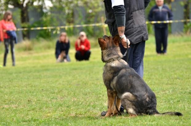 cachorro em treinamento