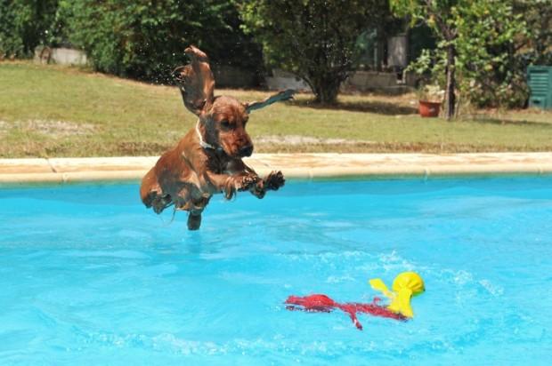 cão na piscina