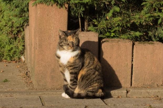 gato no sol