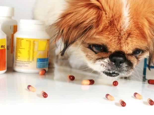 pílulas anticio canino