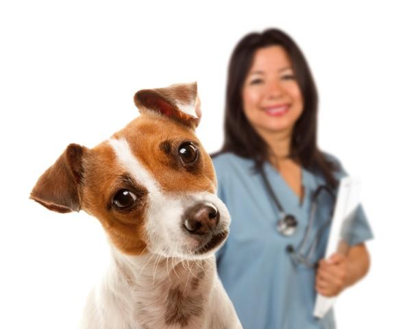 psicólogo canino