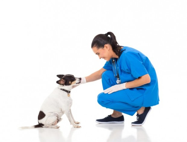 veterinário